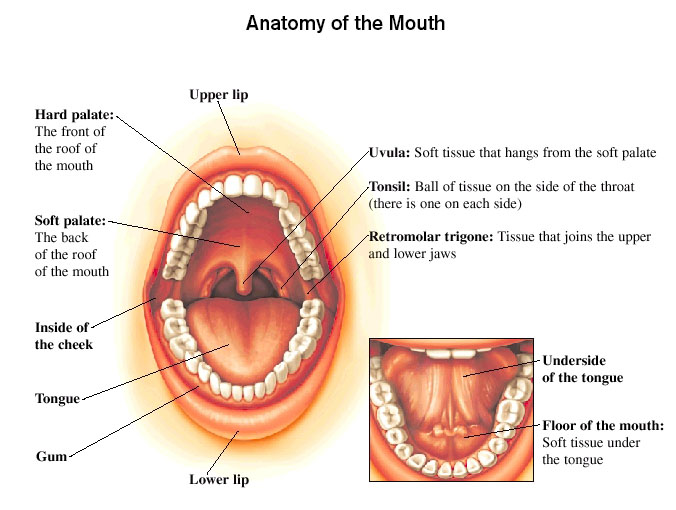Oral Cavity And Oropharyngeal Cancer Brigham And Womens Faulkner