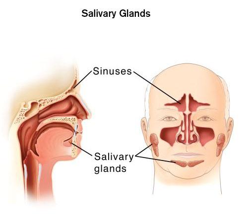 Salivary Gland Cancer - Brigham and Women\'s Faulkner Hospital